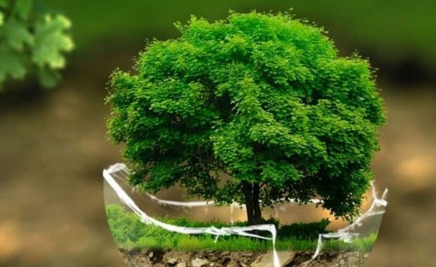 miljø bevidst trykkeri billede af træ
